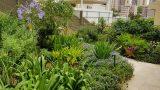garden_25